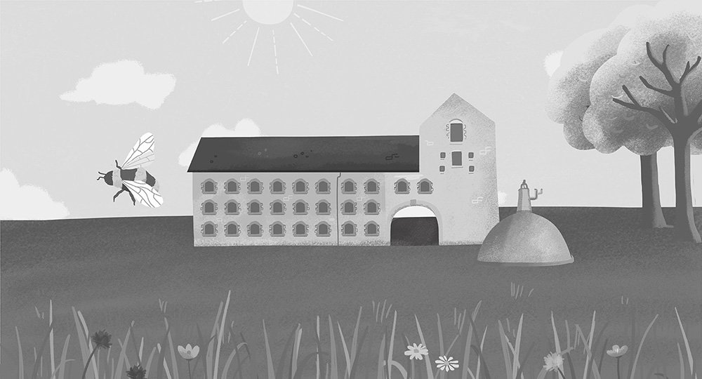 irish-distillers-nature-illustration-animation-ruth-graham-design-illustrator
