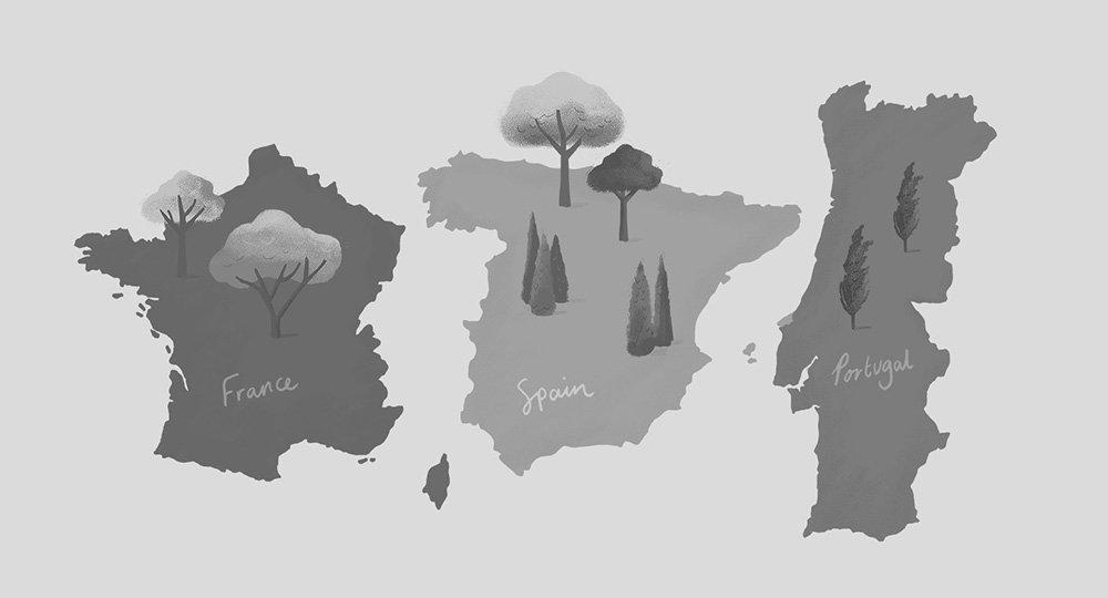 irish-distillers-nature-illustration-animation-ruth-graham-illustrator-ireland